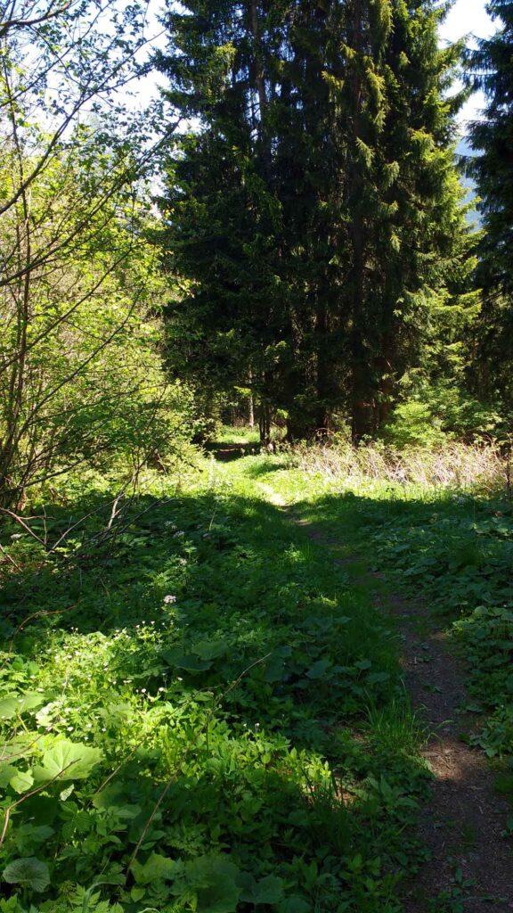 Unschwierig & Flowig – der Trail nach Arzl