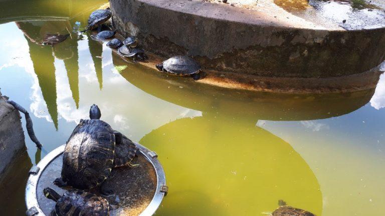 Schildkröten-Kolonie