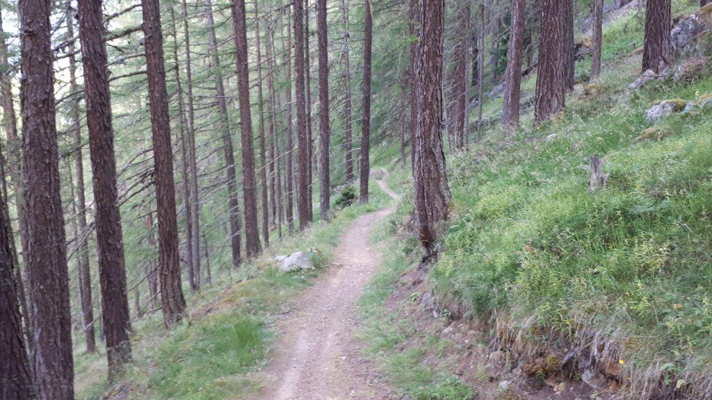 Flowiger Waldboden